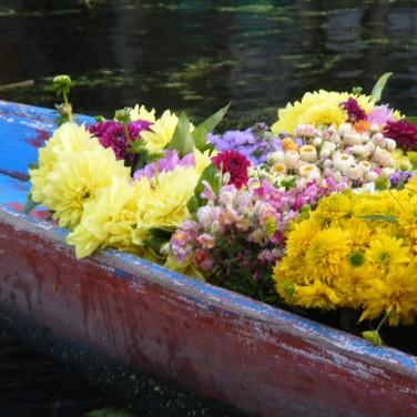houseboat-dal-lake