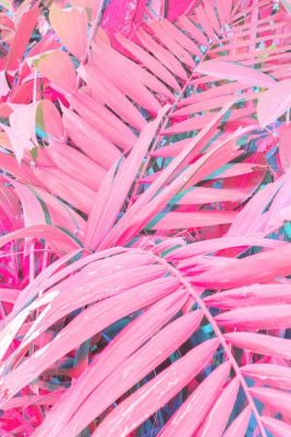 Swatiness_Pink Aesthetic Inspiration 1